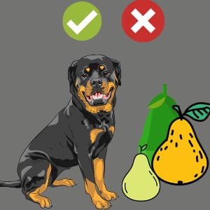 Can dogs eat pears ?