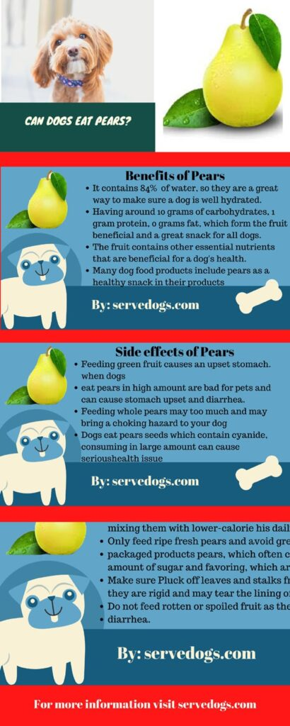 can dogs eat pears infoghrapic