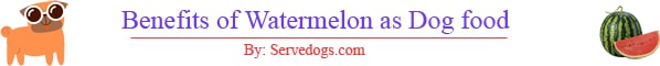 benefits of watermelon for dogs