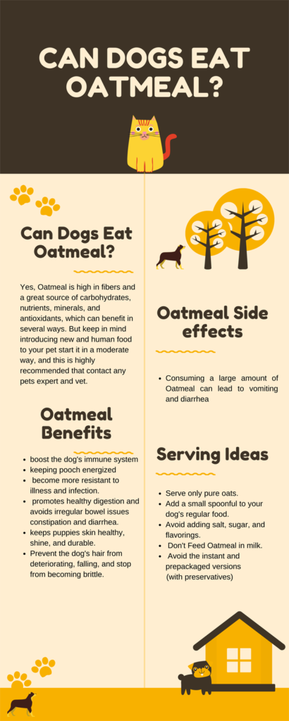 can dogs eat oatmeal infoghrapic