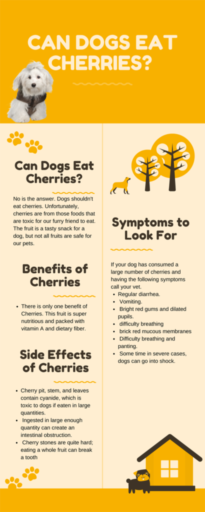 can dogs eat cherries infoghrapic