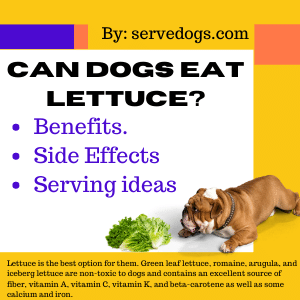 Can dogs eat lettuce? Side effects - Benefits - Serving ideas