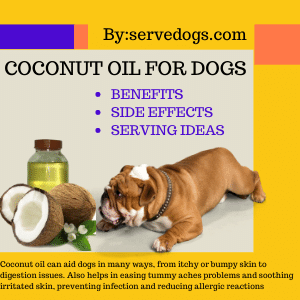 Coconut Oil for dogs - How it Benefits Your Dog's Health