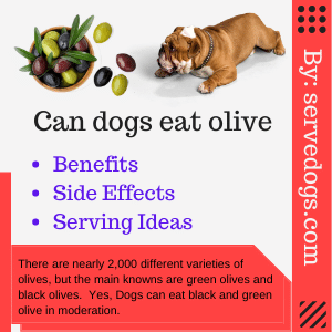 Can dogs eat olive? Are olives bad for dogs