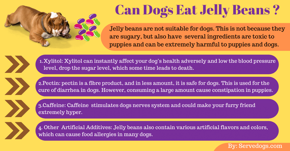 Can dogs eat jelly beans infoghrapic