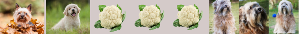 how much cauliflower for dogs