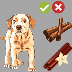 Can Dogs eat Cinnamon? Side Effects,Benefits - Complete Guide