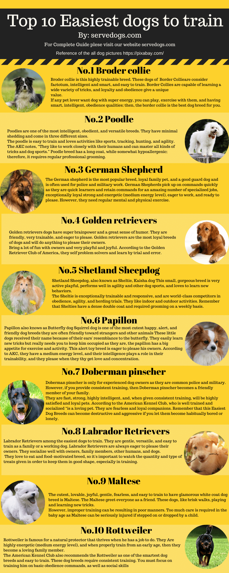 Easiest dogs to train infoghrapic