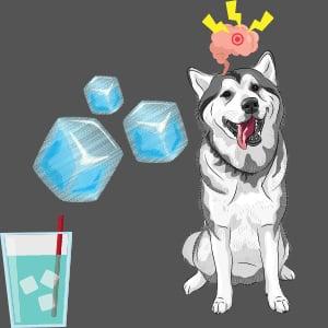 Do dogs get brain freeze?