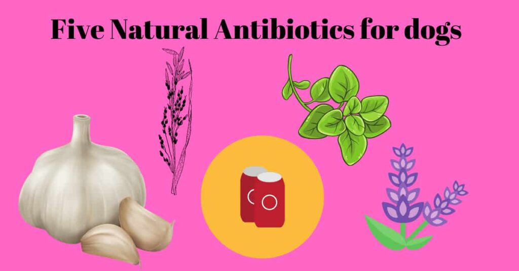Five natural antibiotic for dogs