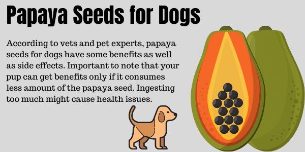 Papaya seeds for dogs