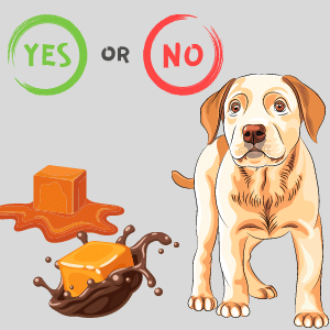 Is caramel bad for dogs? Can dogs have caramel?