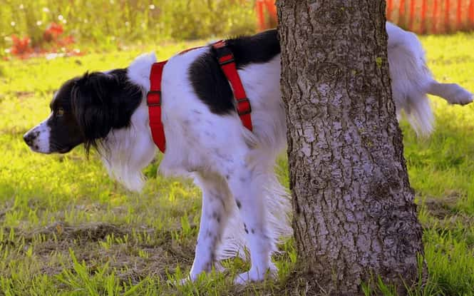 how long can dogs hold their bladder