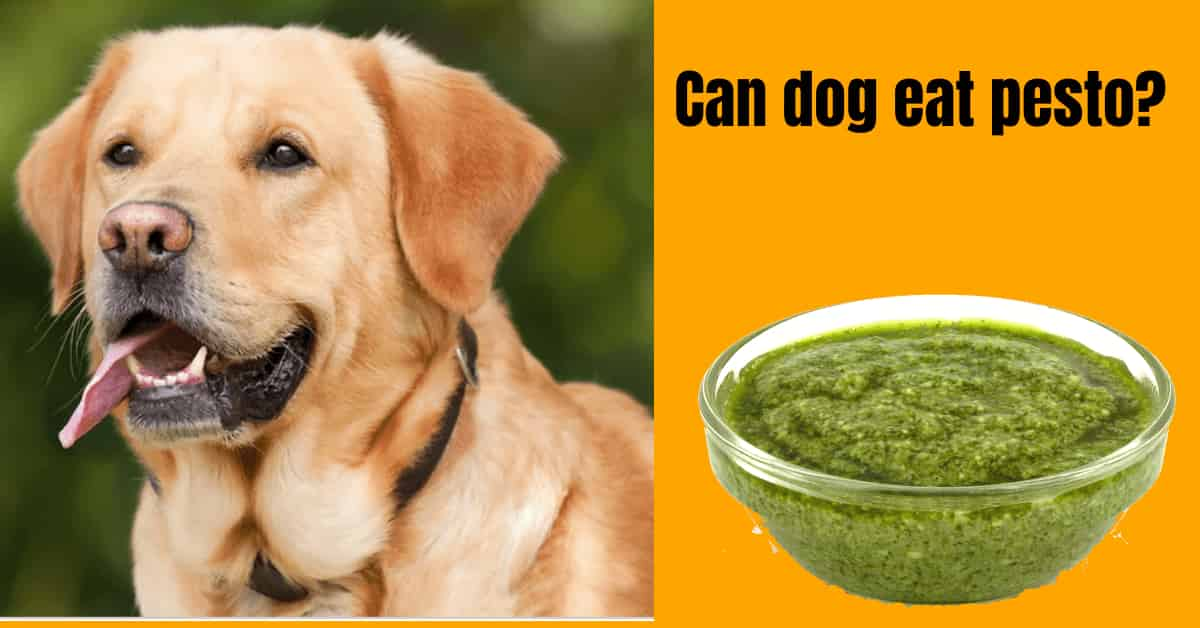 Can dogs eat pesto?