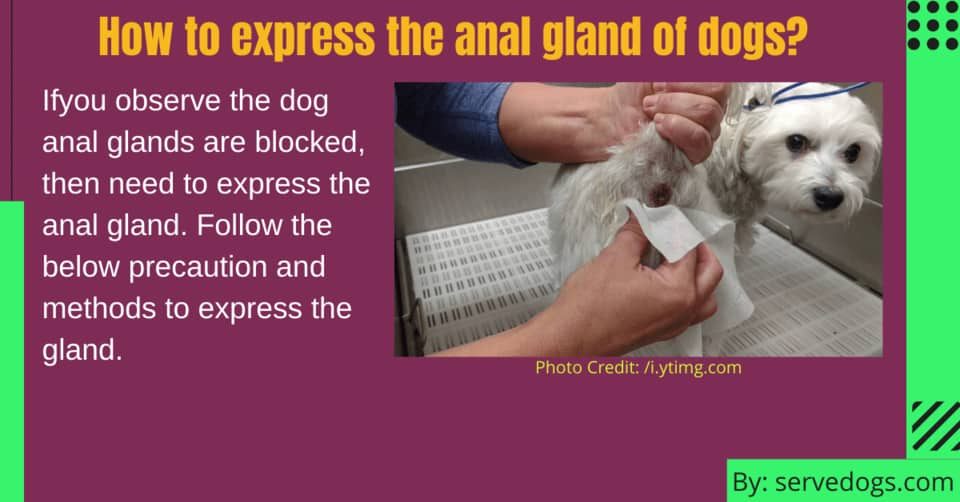 How to express the anal gland of dogs?