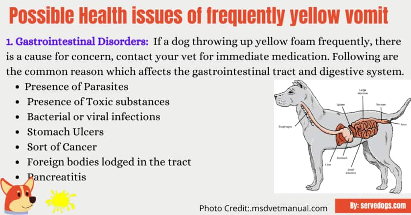 Why do dogs throw up yellow Vomit?