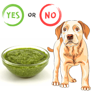 Can dogs eat/have pesto?