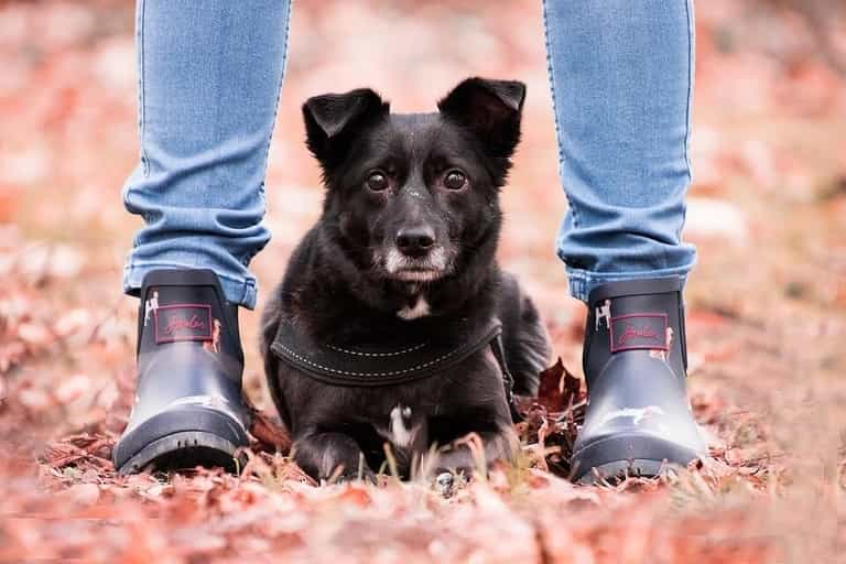 Why do dogs lay at your feet?
