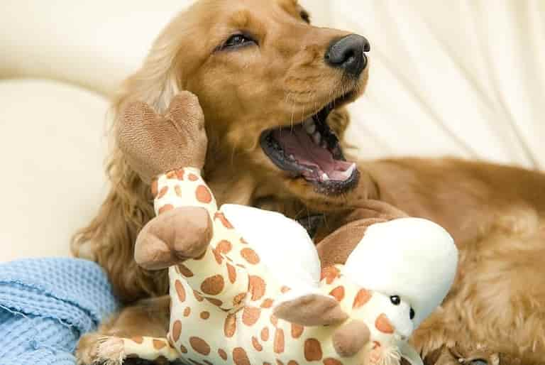 what does it mean when dogs yawn