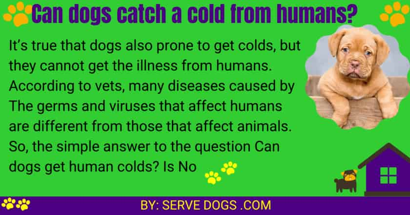 Can dogs catch a cold from humans