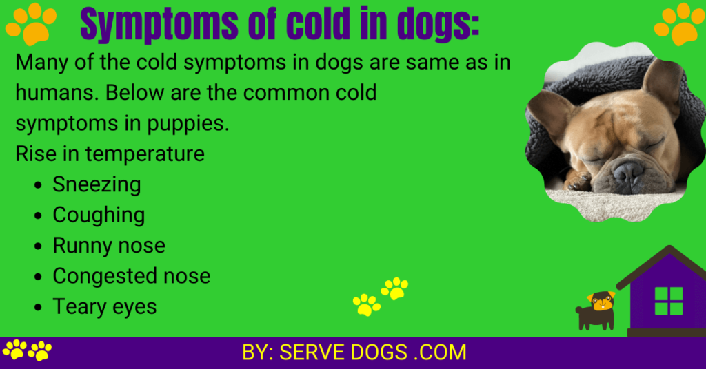 symptoms of cold in dogs