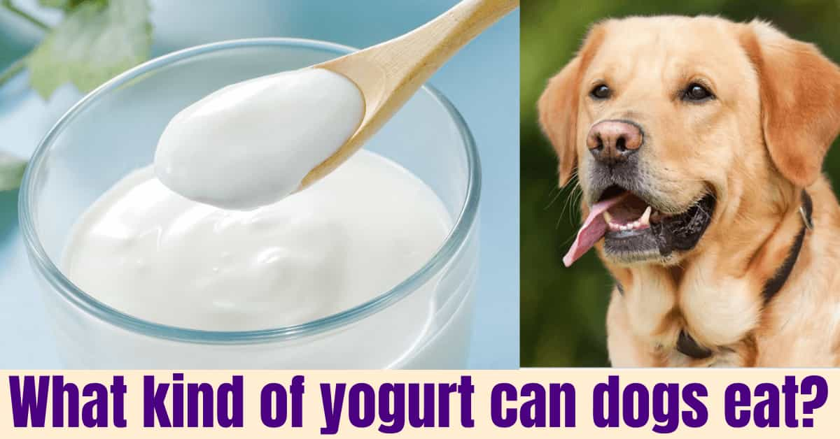 What kind of yogurt can dogs eat?