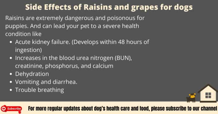 Side Effects of Raisins for dogs