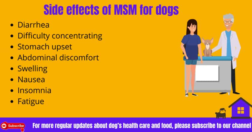 MSM Side effects for dogs