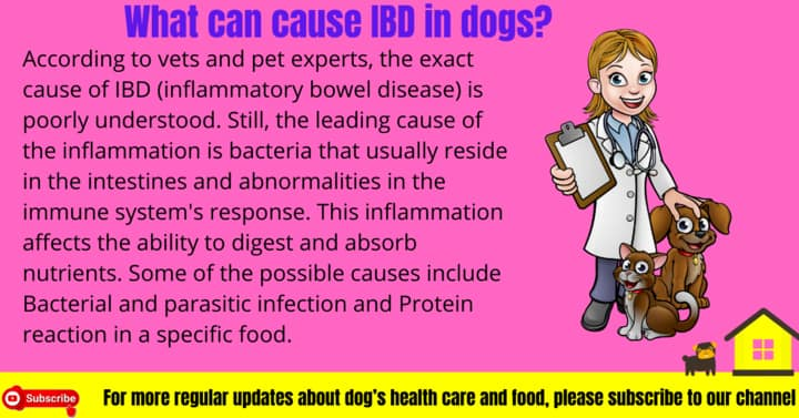 What can cause IBD in dogs?