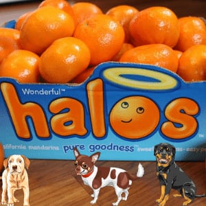 Can dogs eat halos?