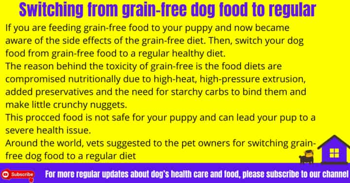 Switching from grain-free dog food to regular