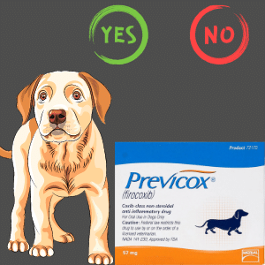 What is previcox for dogs