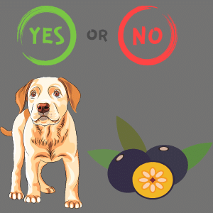Can dogs eat acai?