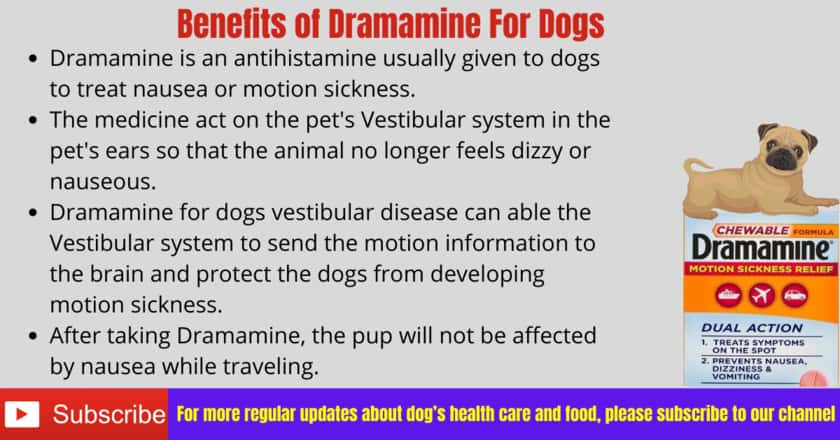 Benefits Of Dramamine For Dogs