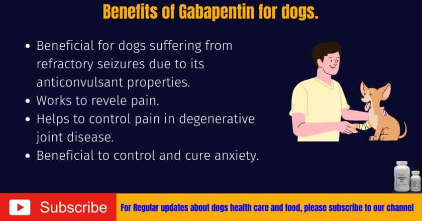 Benefits of gabapentin for dogs