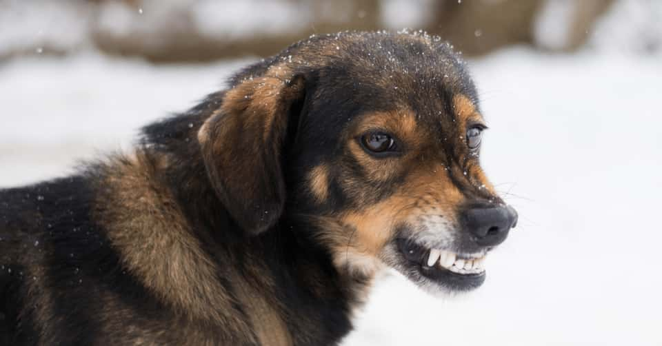 How to prevent dogs from Rabies