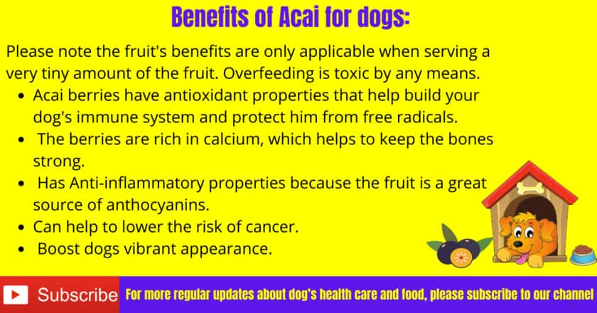 Benefits of Acai for dogs