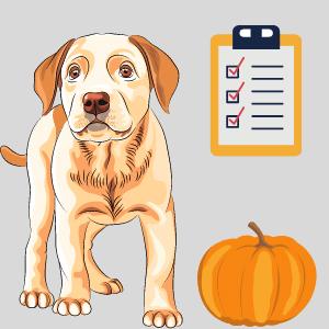 Pumpkin for dogs