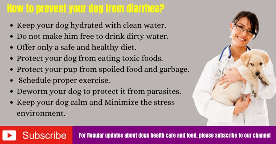 How to prevent your dog from diarrhea?