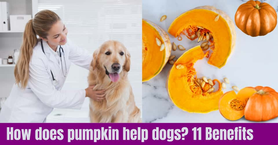 How does pumpkin help dogs