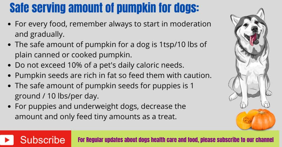 How to give pumpkin to dogs?