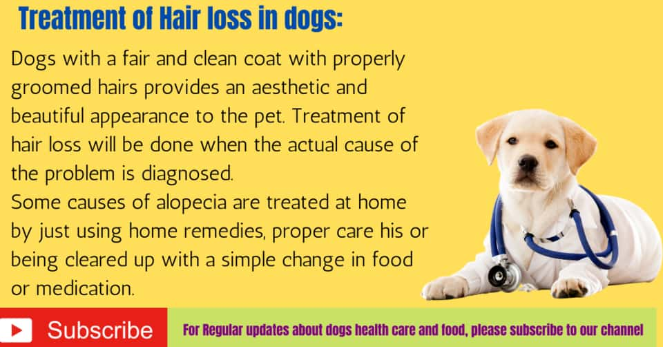 Treatment of Hair loss in dogs