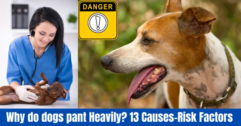 Do dogs pant when they are in pain?