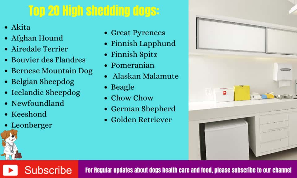 Top 20 High/Worst shedding dogs: