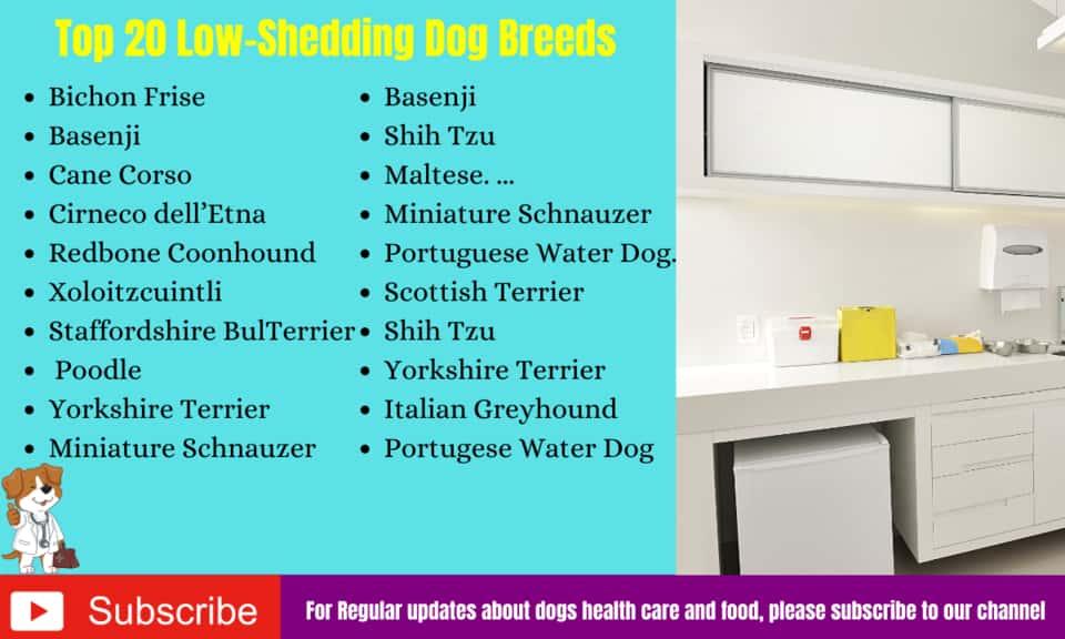 Top 20 Low-Shedding Dog Breeds