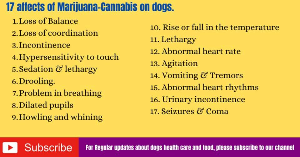 Marijuana affects on dogs