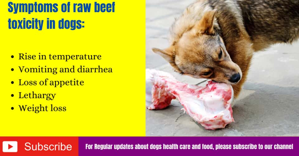 Symptoms of raw beef toxicity in dogs
