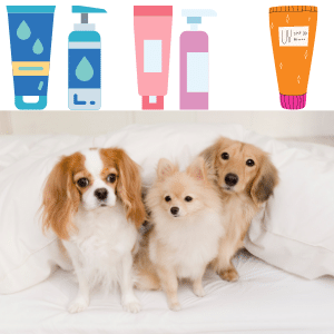 Can you put lotion on dogs?