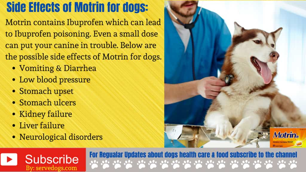 Side Effects of Motrin for dogs