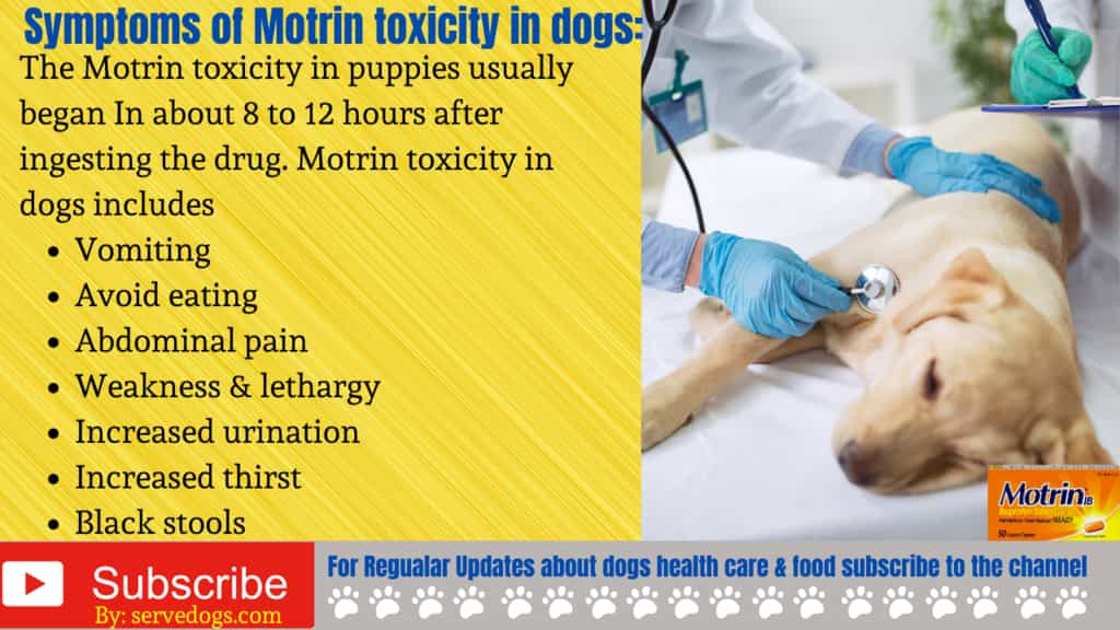 Symptoms of Motrin toxicity in dogs